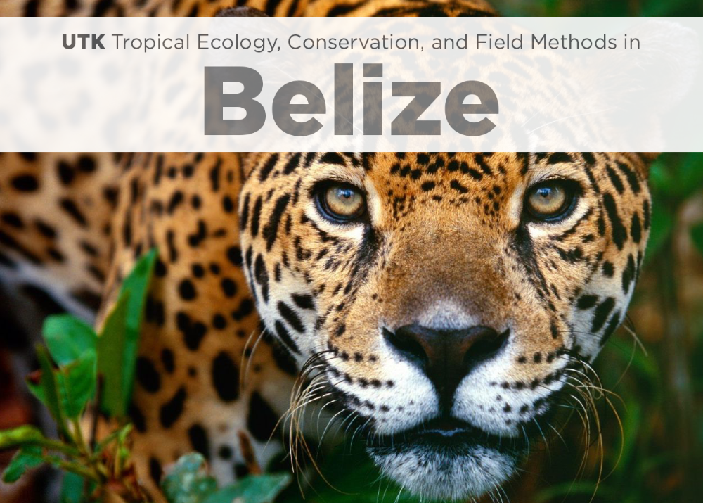 UTK Tropical Ecology, Conservation and Field Methods in Belize